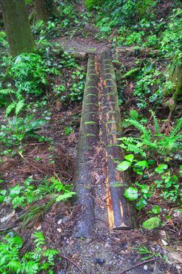普段なら何のこともない木の橋も...
