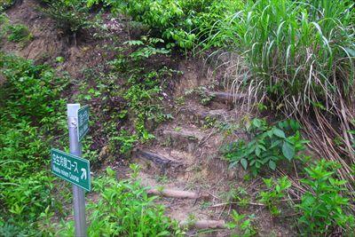 林道を挟んで向かい側にルートは...