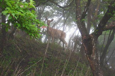 少し回りこんでみました。鹿はぴ...