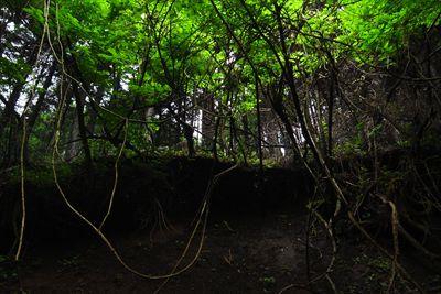・・・右側(右岸)は植林地です...