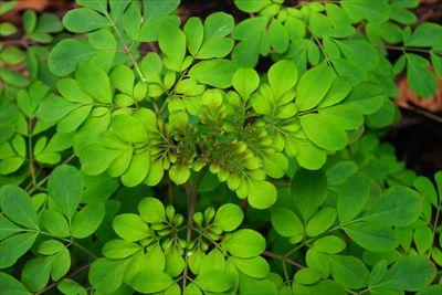 緑のグラデーションが綺麗・・・...