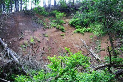 なるほど、斜面が崩れて木が谷底...