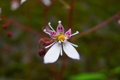 変な形の花・・・。調べてみたら...