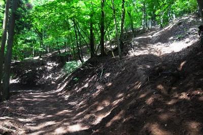 林道を挟んでほぼ正面に踏み跡が...