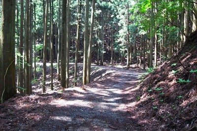 あとは長い林道歩き・・・。...