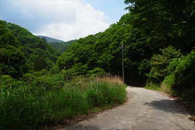 単調な林道歩きに飽きた・・・。...