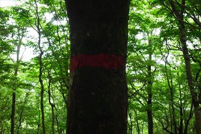 踏み跡もしっかりあるし木に、こ...
