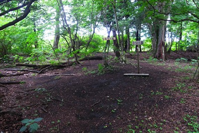 樹林に囲まれたピーク・・・...