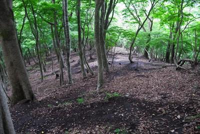 広葉樹林帯をジグザグに下る。...