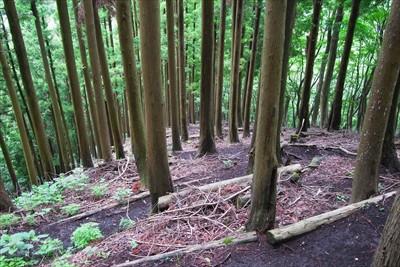 植林地帯をジグザグに下る。...