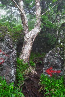 巨岩の間を通り抜ける。...