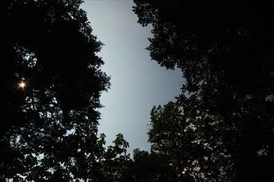 所々に樹冠部が開けている所があ...