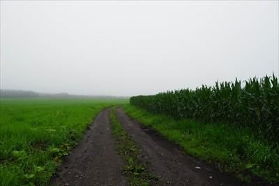 右側にトウモロコシ畑が広がって...