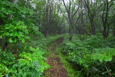 森に入ってしばらく真っ直ぐ・・...