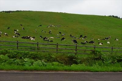 牛がいっぱい・・・。今度は本物...