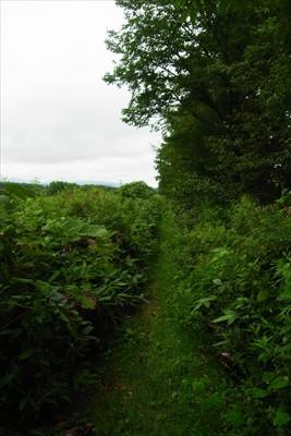 再び牧草地の縁を歩く。この先で...