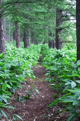 ・・・細い林を進む。...