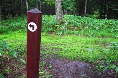 樹林帯の中で左に曲がって、写真...