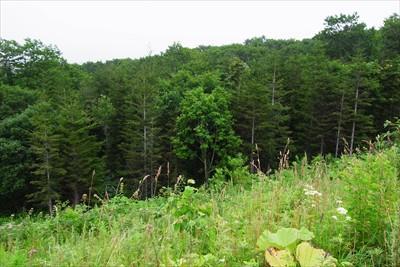 車道を歩いている時に左下の森の...