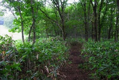 なだらかな樹林帯に出た。...