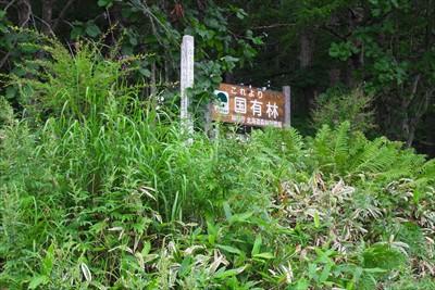 この辺りは国有林だ・・・。...