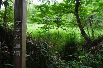 おぉ、ここがケネカ湿原だ・・・...