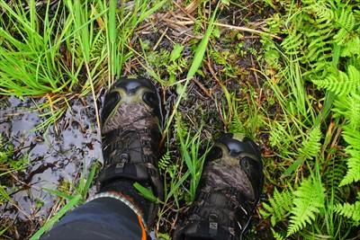 普通さぁ、湿原ってさぁ、木道が...