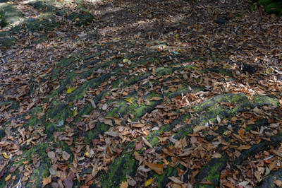溶岩が流れた跡だね。...