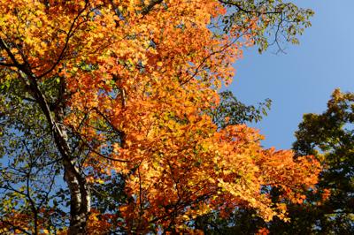 山頂直下で今日一の紅葉。...