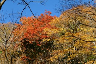 火口の斜面も紅葉真っ盛りだね。...