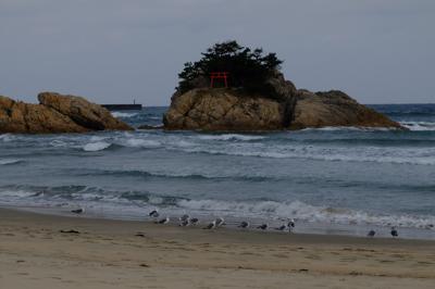 海鳥がたくさんいる。...