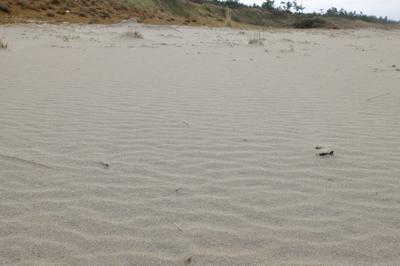 もう砂丘なの?...