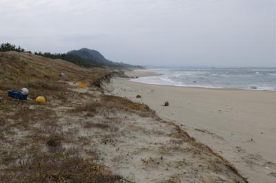 砂浜ばかりだと飽きるので1段上...