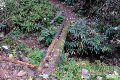 ・・・木の橋がある。濡れていて...