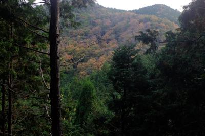 向こうの山の紅葉・・・。黄色ば...
