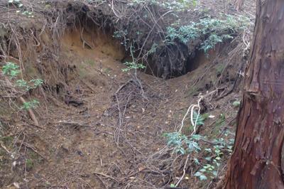 登山道の脇に怪しい穴が・・・熊...