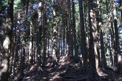 一部急な所もあるけど、木の根が...