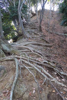 登山口から見城山までは急な登り...