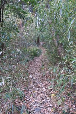 笹薮のトンネルをくぐります。...