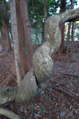 ネジネジの木。...