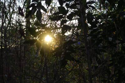 稜線から太陽が顔を出した。...