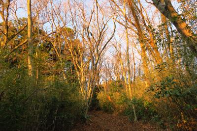 森がオレンジに染まる。...