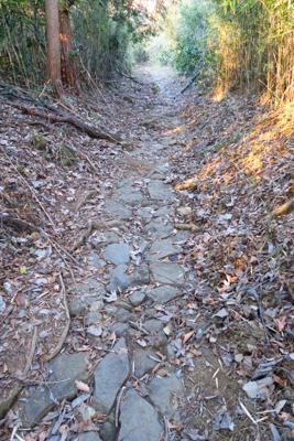緩やかな歩きやすい道が続く・・...
