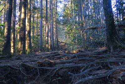 いつもはツマラナイ針葉樹林帯だ...