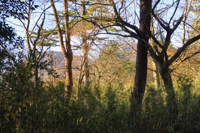 木々の間に二子山が見えてきた。...