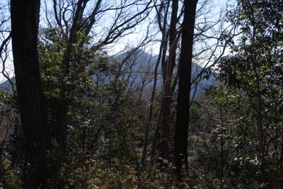木々の間に見るのは桜山だろうか...