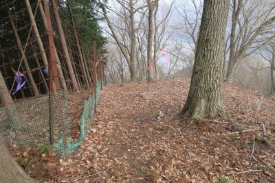 再びの鹿柵。2つ上の写真と雰囲...