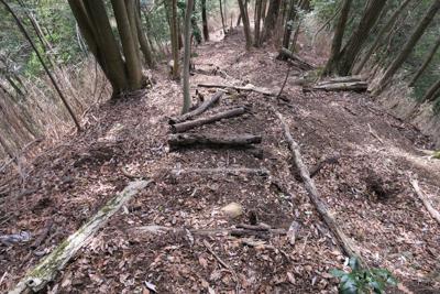 木の階段もある。林業者用なのか...