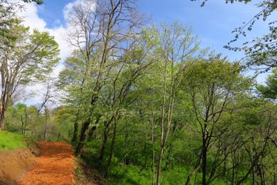 オレンジの道と、木々の緑、空の...