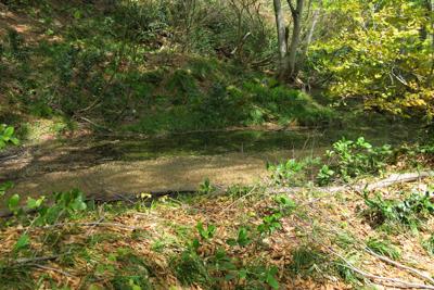 左手側に小さな池(水溜り?)が...